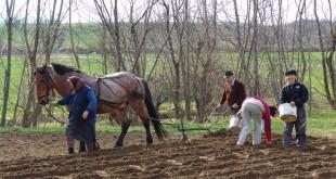 Seceta întârzie însămânţările de toamnă. Agricultorii hunedoreni susţin că nu pot semăna deoarece pământul este prea tare