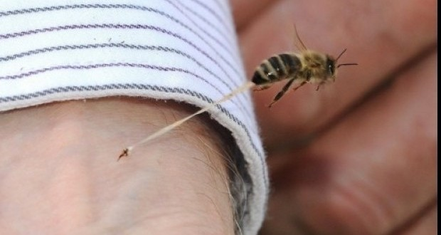 Zeci de hunedoreni ajung la spital înțepați de albine și viespi