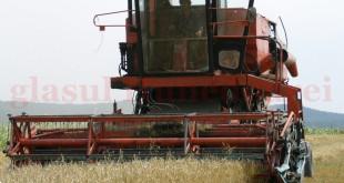 Producţii agricole bune la culturile cerealiere