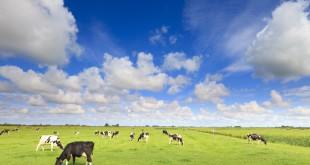 Utilizatorii de păşune fără animale vor putea depune cererea unică