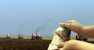 Agricultorii hunedoreni își primesc banii pentru culturile calamitate de secetă