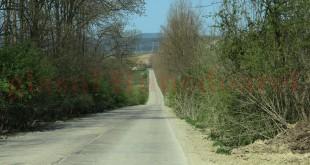 """CJ Hunedoara vrea 40 de milioane de euro pentru drumul de pe malul nordic al Mureşului. Poate, cu ocazia viitoarelor lucrări, va fi curăţat, în sfârşit, şi de vegetaţia abundentă de pe margine (una dintre """"bolile cronicizate"""" ale drumurilor judeţene hunedorene)"""