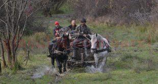 """Pe """"drumul"""" spre Valea Mare de Criş se împotmolesc până şi căruţele trase de cai"""
