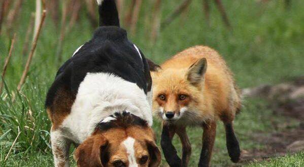 """Cea mai vândută și inedită poză a lui Mircea Costina, """"The-world-worst-hunting-dog"""" (în traducere – """"Cel mai nepriceput câine de vânătoare"""")"""