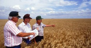 farmers-in-wheat-field_01670-766x437