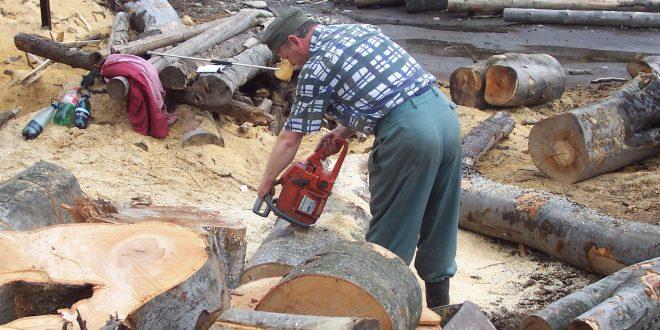 Dacă situaţia de la Simeria se generalizează, hunedorenii care au nevoie de lemne de foc vor trebui să se descurce (din nou) fără ajutorul Direcţiei Silvice.