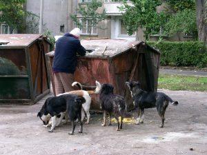 Reprezentanţii autorităţilor susţin că fenomenul câinilor comunitari nu va dispărea atâta timp cât ei sunt hrăniţi de foarte mulţi localnici, iar alţi localnici, în locă să-şi sterilizeze patrupedele, preferă să arunce puii acestora în stradă