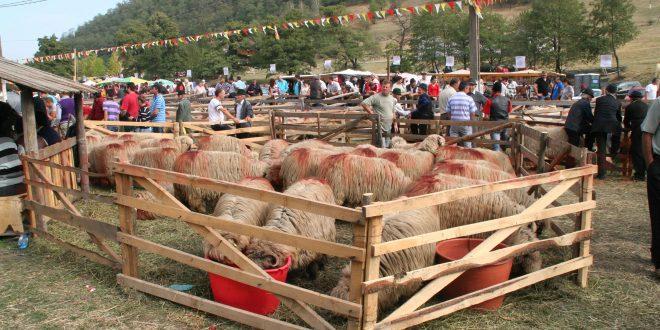 Costesti - Turcana 2012 6863