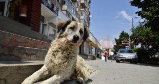 Locul câinilor nu e pe stradă, lucru pe care încă nu-l înţeleg mulţi hunedoreni