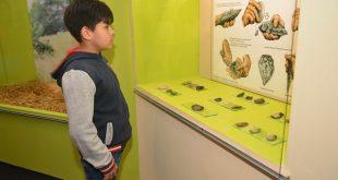 Un mic vizitator la Muzeul de Arheologie, Istorie şi Etnografie Hunedoara (aflat în curtea exterioară a Castelului Corvinilor)