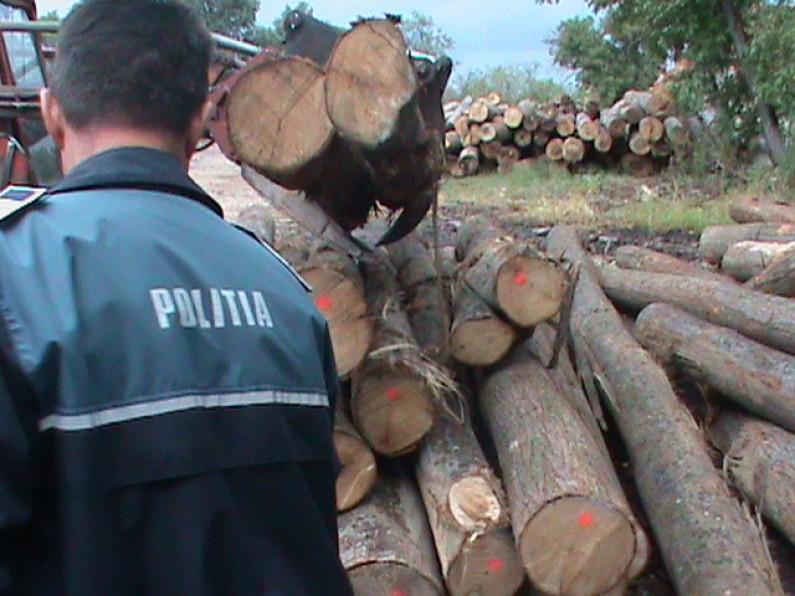 Photo of Dosar penal sub aspectul comiteriiinfracțiunilor de tăiere ilegală și furt de arbori pentru un bărbat în vârstă de 30 de ani, din comuna Dobra