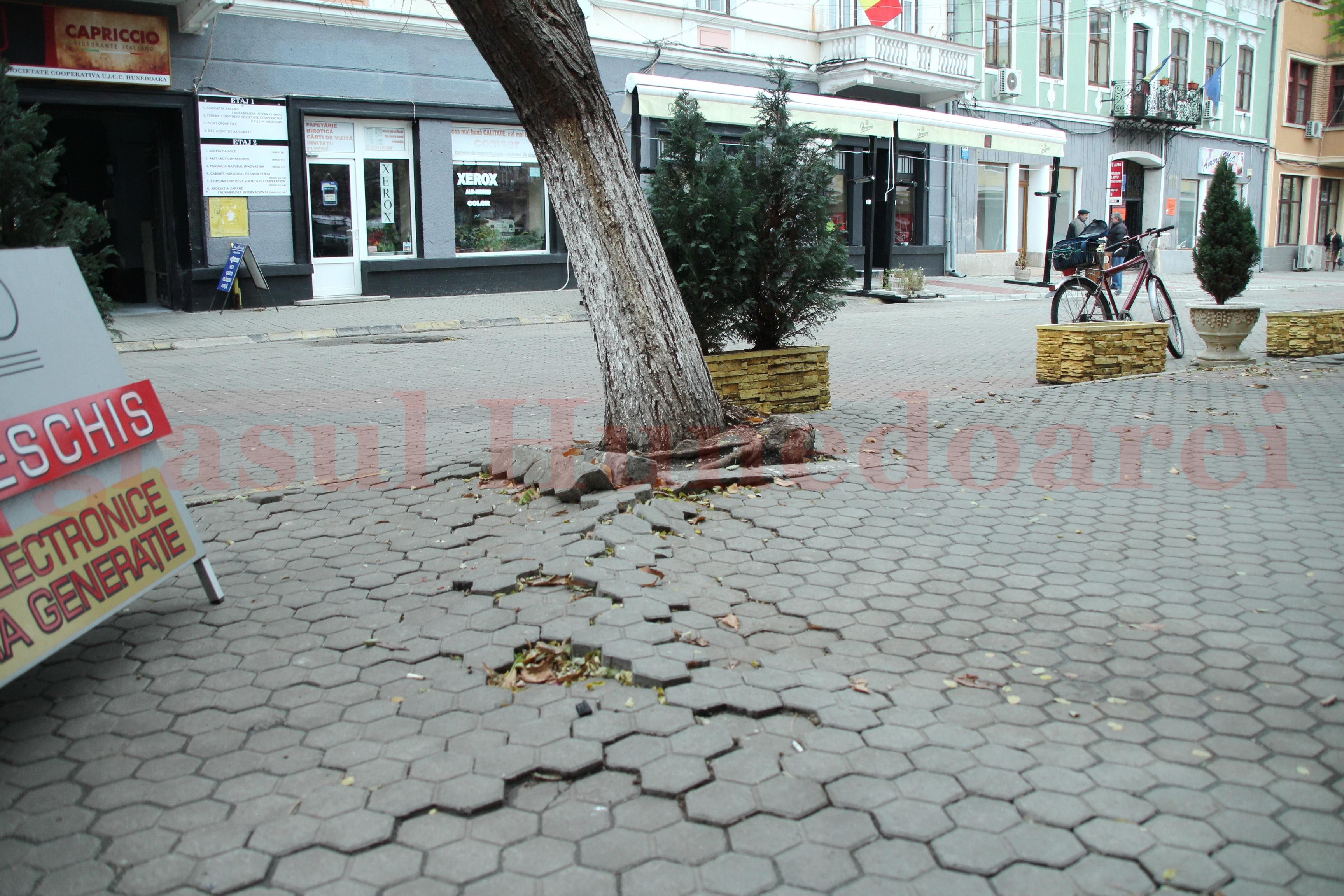 Photo of Rădăcinile unui copac scot dalele de pe centrul vechi al Devei