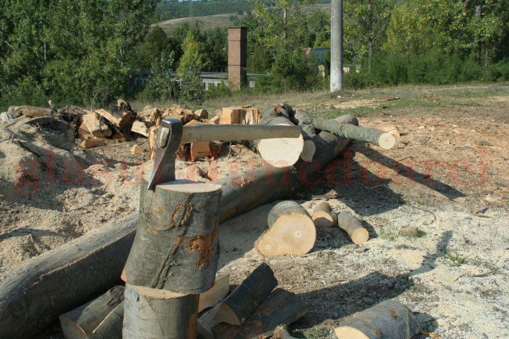 Photo of 21 cioate nemarcate de esență carpen, gorun, cer și jugastru descoperite de jandarmii hunedoreni