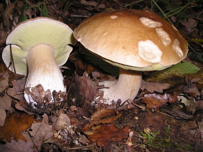 Photo of Atenție! Ciupercile din pădure sau de la persoane particulare pot fi fatale