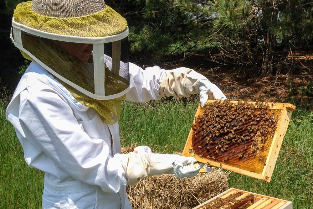 Photo of Producții de miere de floarea-soarelui foarte bune, dar inexistente la tei și salcâm