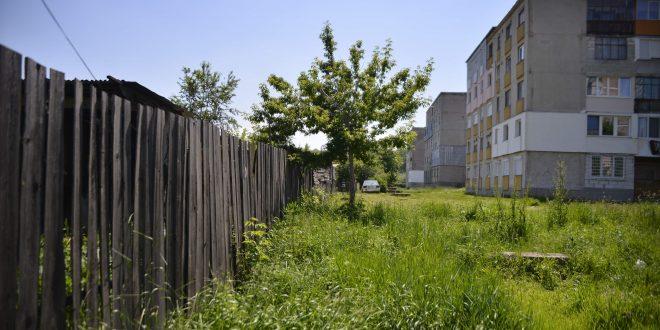 """Partea din spate a blocurilor de pe strada Trandafirilor este limita dintre oraş şi """"jungla canină"""" de la Valea Seacă"""
