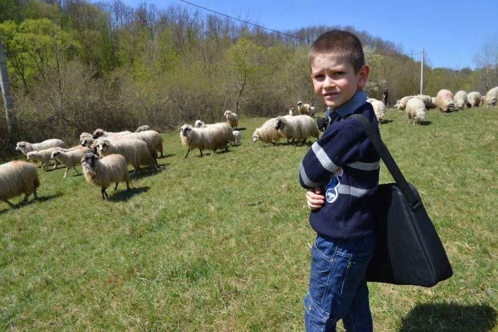 Darius întâlnea, din când în când, pe drumul spre sau dinspre şcoală, doar câte-un cioban cu oi (şi câinii aferenţi, destul de agresivi)