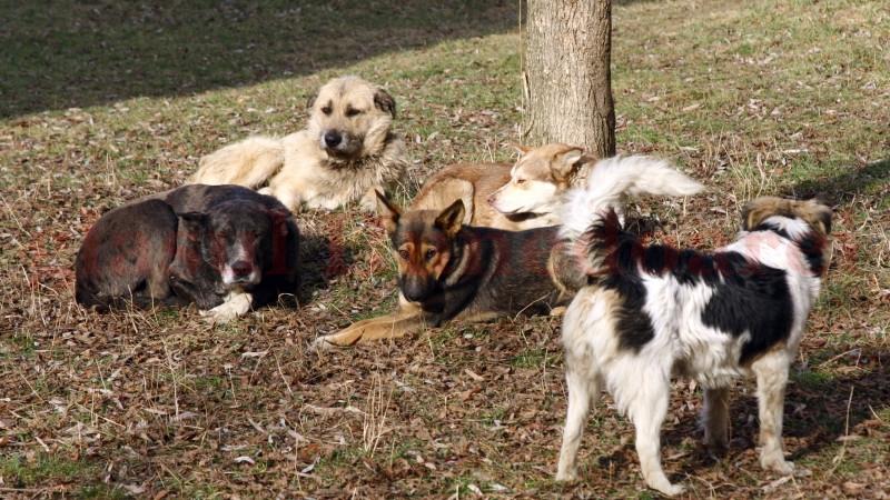 Photo of Creşterea numărului de animale fără stăpân, în atenţia prefectului