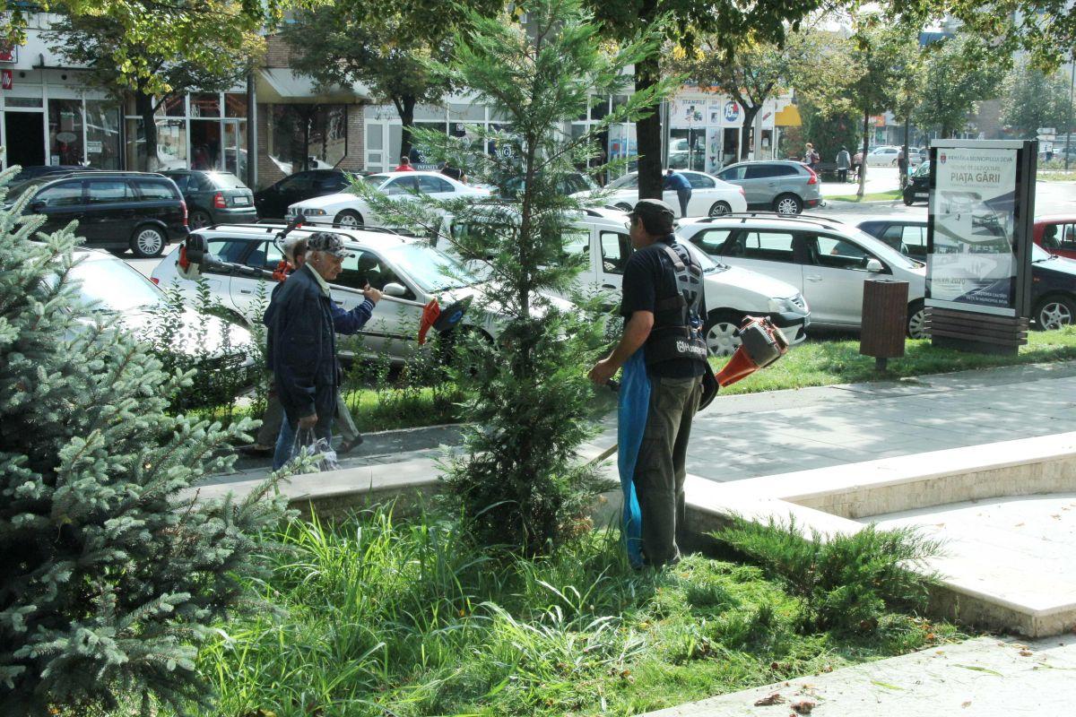 Deși avea muncitori suficienți, SPIGM a externalizat serviciile către alte firme, care tăiau iarba, dar și toaletau copacii