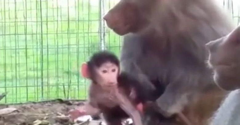 SURSA FOTO: Captură video Facebook.com / Grădina Zoologică Hunedoara