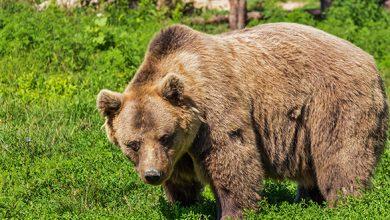 """Photo of """"Ziua Ursului"""", sărbătoarea sfințirii holdelor și livezilor"""