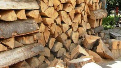 Photo of Lemn fără acte de proveniență legală găsit la sediul unei firme din comuna Pui