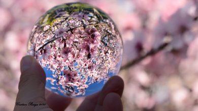 Photo of Primăvara e afară – fotografia zilei