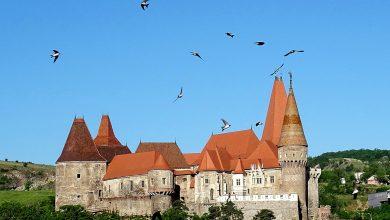 Photo of Fotografia zilei – Rândunele și Castel