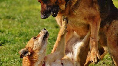 Photo of Dosar de cercetare penală întocmit de poliţişti, în cazul agresiunii dintre doi câini, postată pe mai multe reţele de socializare, la sfârşitul lunii trecute.
