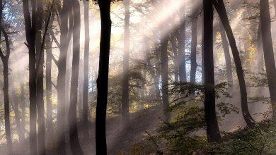 Photo of Dimineți…prin păduri cutreierând… – Fotografia zilei