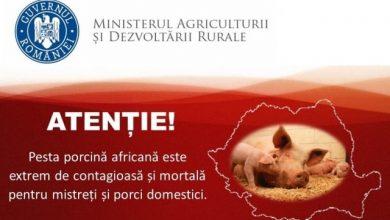 Photo of Caz de Pestă Porcină Africană descoperit astăzi pe raza comunei Vața de Jos