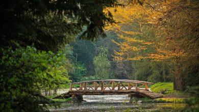 Photo of Arboretumul Simeria – invitație la plimbare duminicală și fotografiere – Fotografia zilei