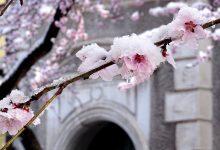 Photo of Florile de pe strada Revoluției din Hunedoara acoperite de zăpadă – Fotografia zilei